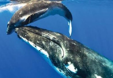 Whale Watching Laws